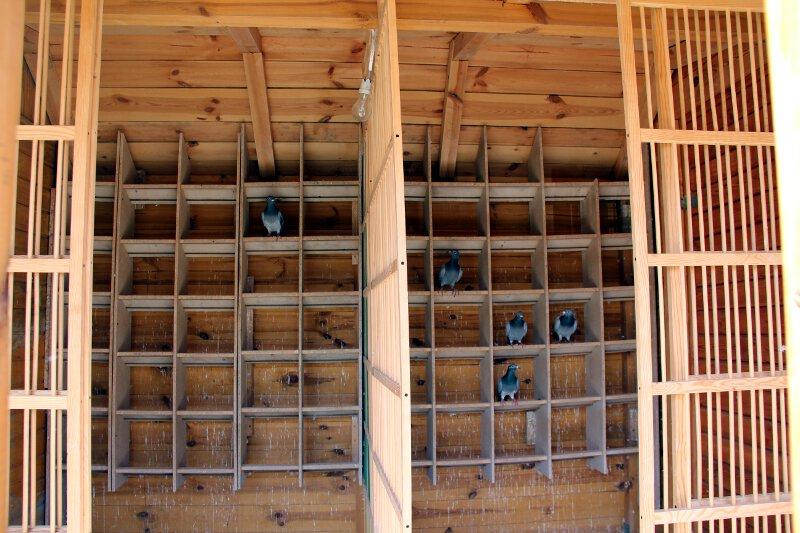 Gołębniki lotowe w oddziele 0177 Radom - wewnątrz